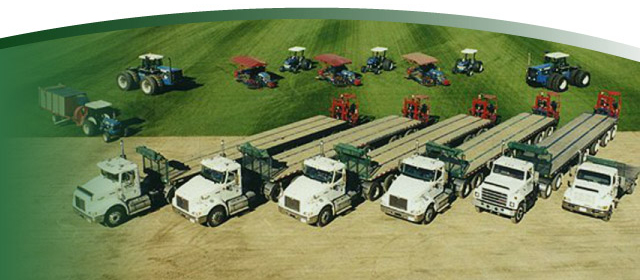 Brayford Sod Farms truck fleet | High on Grass!