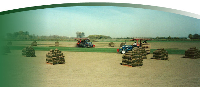 piles of Alliston sod | High on Grass!